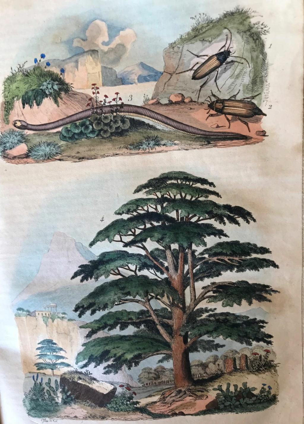 Illustrations naturalistes - belles images du 19e siècle Czodre10