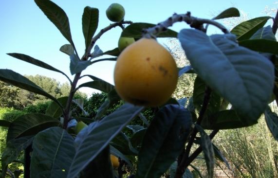 Et vos fruitiers  ?  Dsc00515