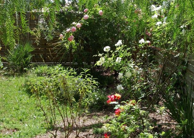 Onze, dix, neuf, .... tous au jardin !! - Page 3 Dsc00645