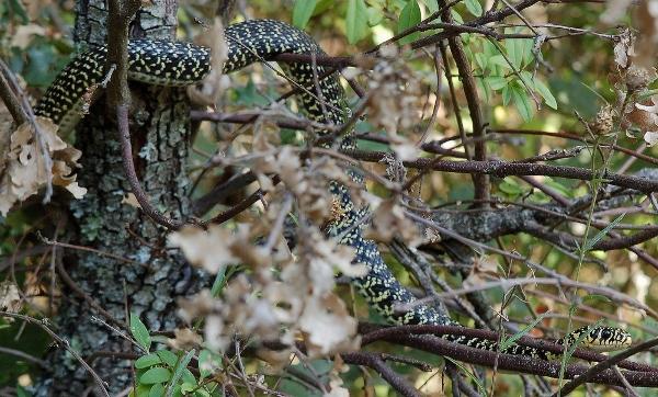 Serpent Dsc_0011