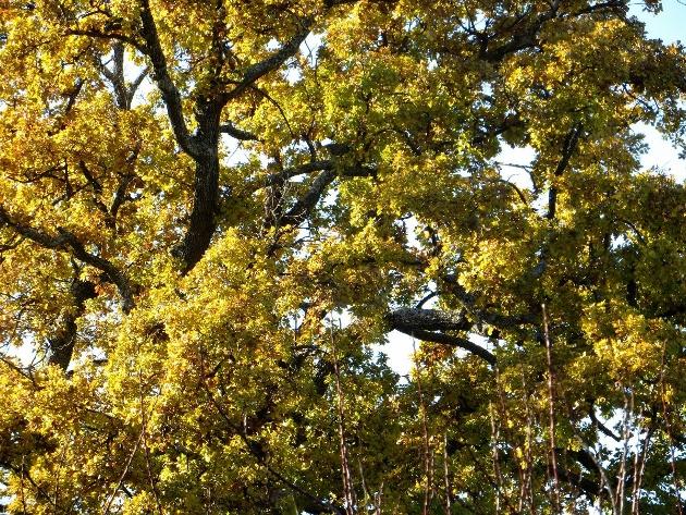 Nos arbres en hiver 2018 Dzocem10