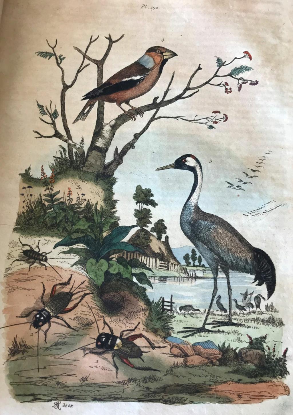 Illustrations naturalistes - belles images du 19e siècle Hzoron10