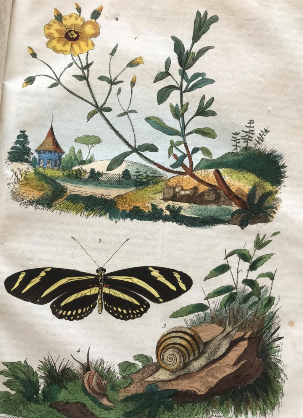 Illustrations naturalistes - belles images du 19e siècle Illust10