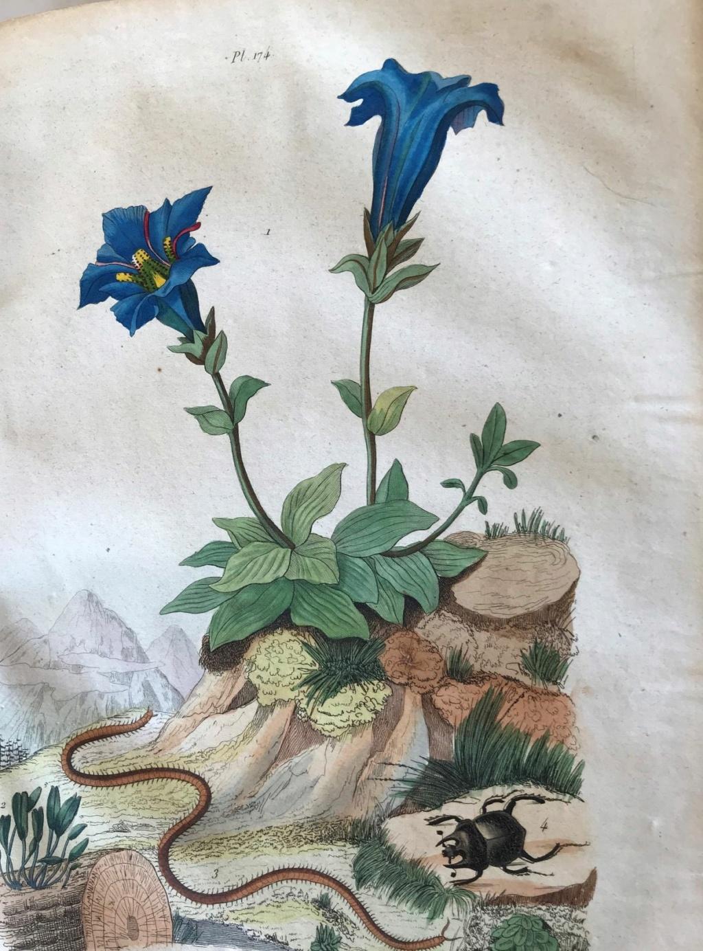 Illustrations naturalistes - belles images du 19e siècle Illust11