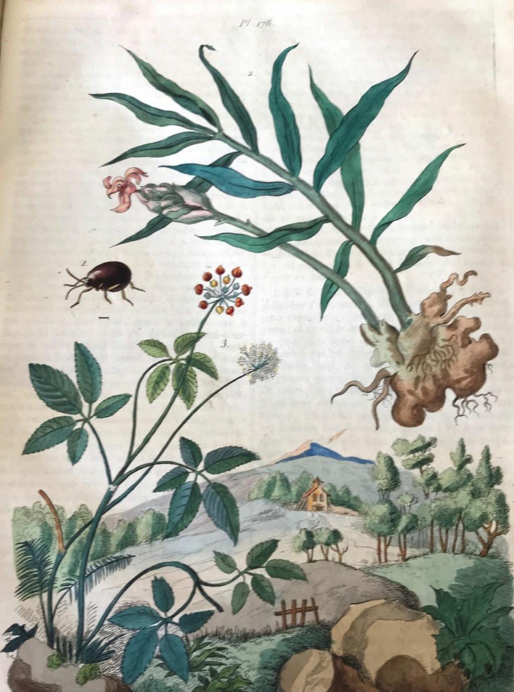 Illustrations naturalistes - belles images du 19e siècle Illust12