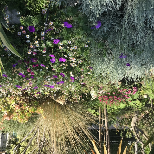 Air d'été au jardin Img_9223