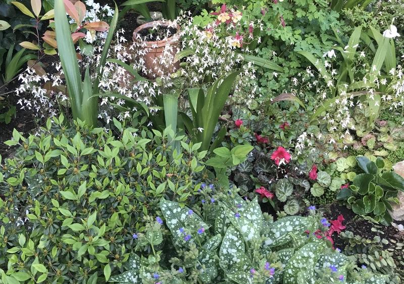 Douceurs jardinières - Page 2 Img_9420