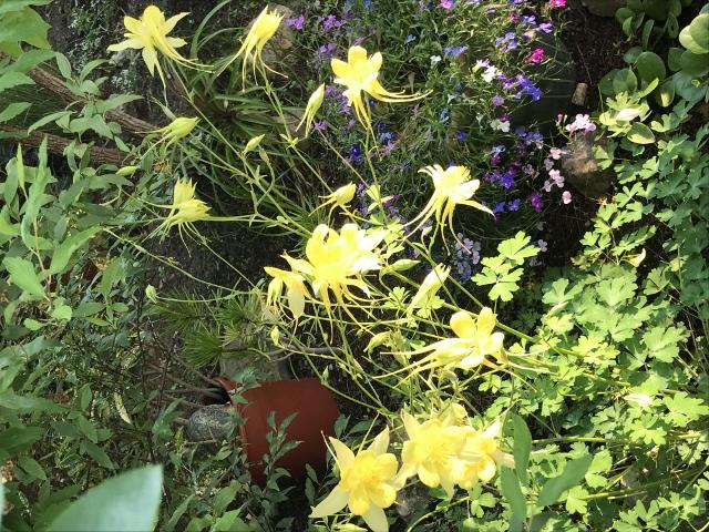Air d'été au jardin - Page 2 Img_9715