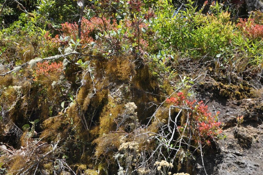 """Défi concours : """" Fantastiques Lichens  """"- Participations  Lichen12"""
