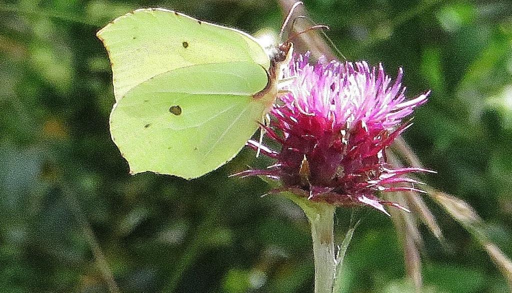 fil(et) à papillons - Page 18 Lus_la32
