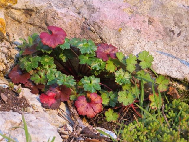 Une devinette composite d'un coin de mon jardin - Page 2 Mars_223
