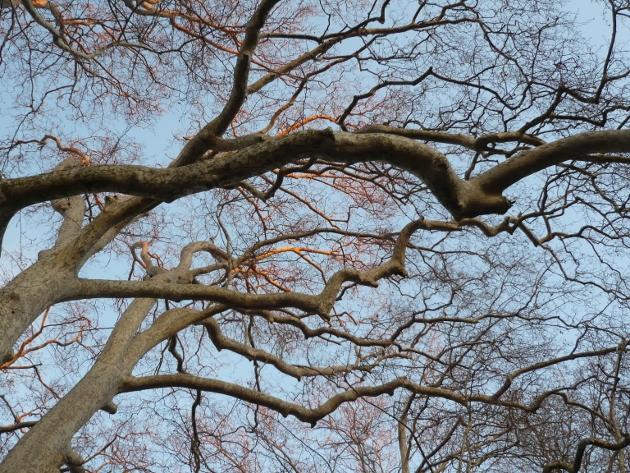 """Déficoncours """"silhouettes hivernales"""" - les participations Nature13"""