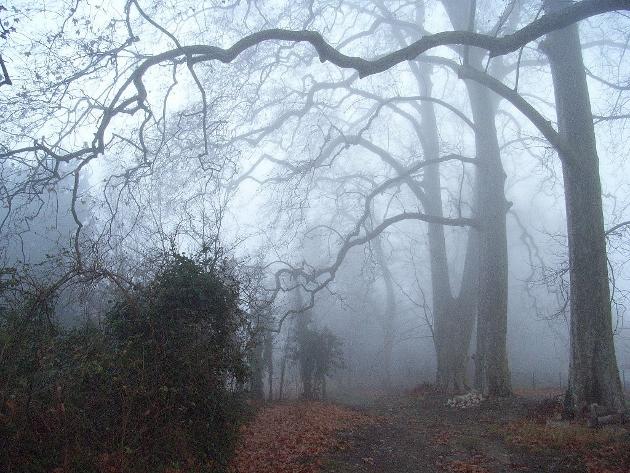 """Déficoncours """"silhouettes hivernales"""" - les participations Rimg0110"""