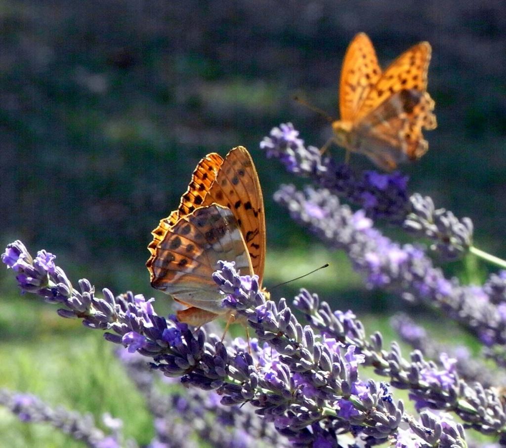 fil(et) à papillons - Page 18 Rimg4810