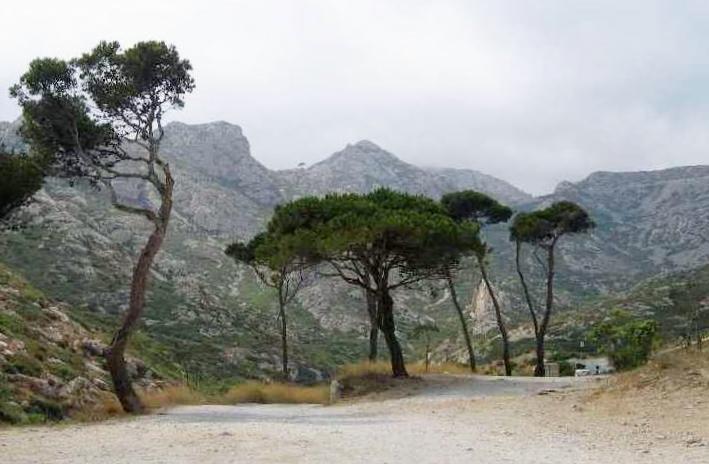 Pinus pinea - pin parasol - Page 3 Sormio10