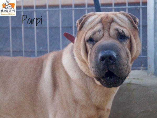 Parpi 3 ans ( 78 ) L ' Association Aresp P1812012