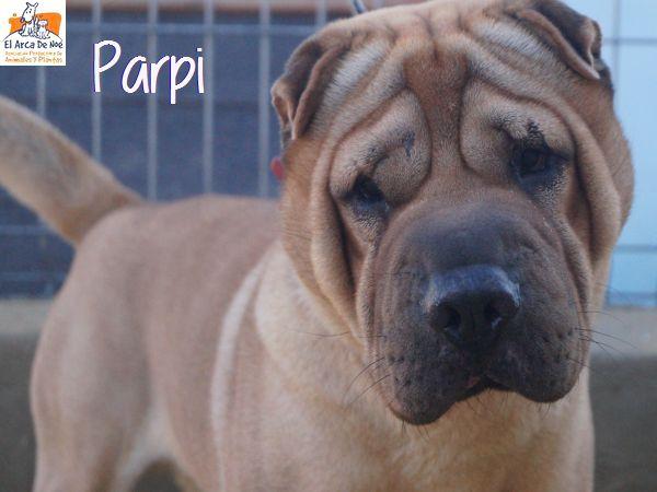 Parpi 3 ans ( 78 ) L ' Association Aresp P1812013