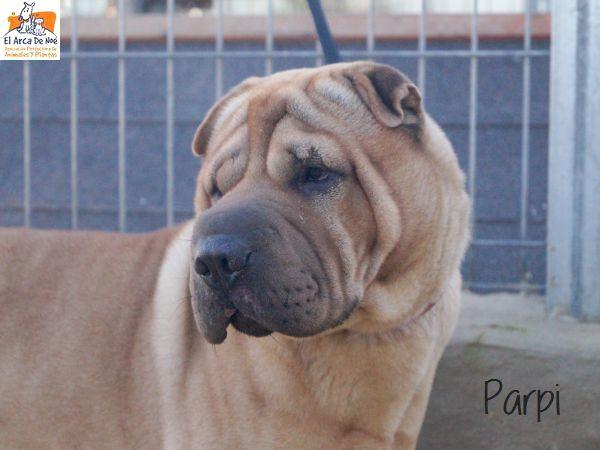 Parpi 3 ans ( 78 ) L ' Association Aresp P1812014