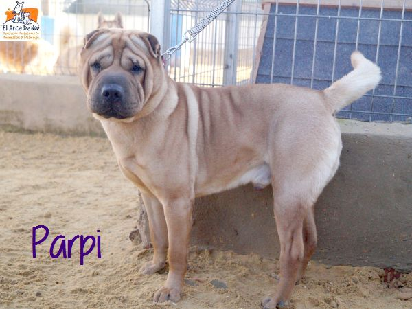 Parpi 3 ans ( 78 ) L ' Association Aresp P1812015