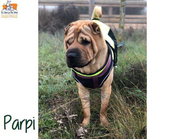 Parpi 3 ans ( 78 ) L ' Association Aresp Parpi_11