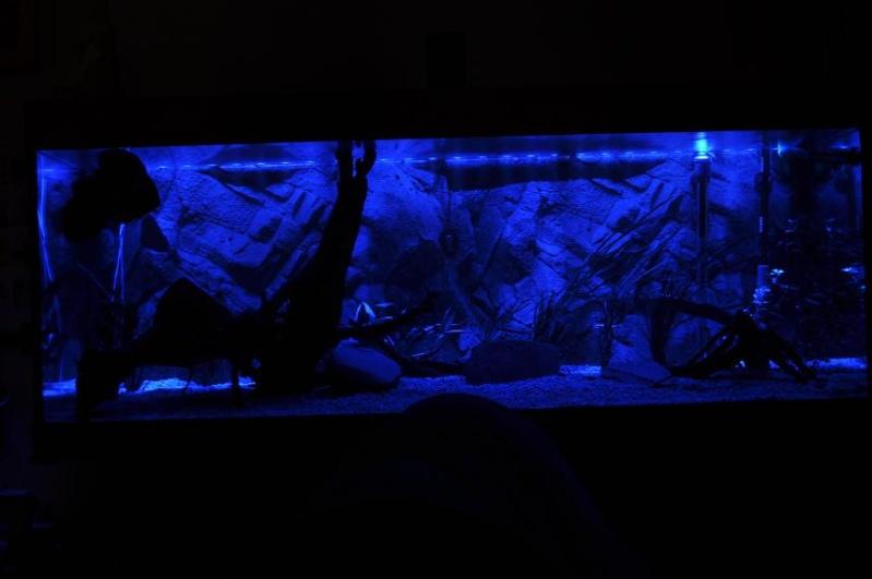 """rampe leds bleue pour lumière """"de lune"""" 7710"""