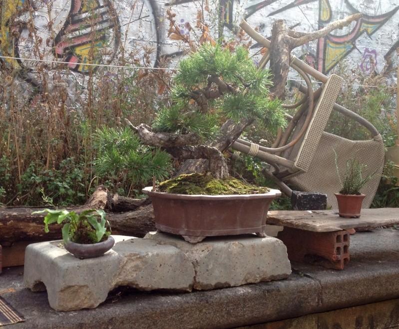 Urban bonsaïs Expo210