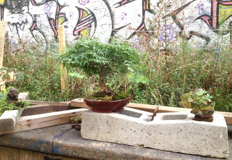 Urban bonsaïs Expo310