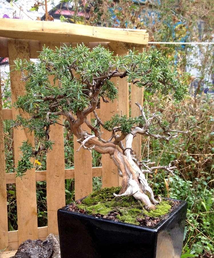 Urban bonsaïs Expo410
