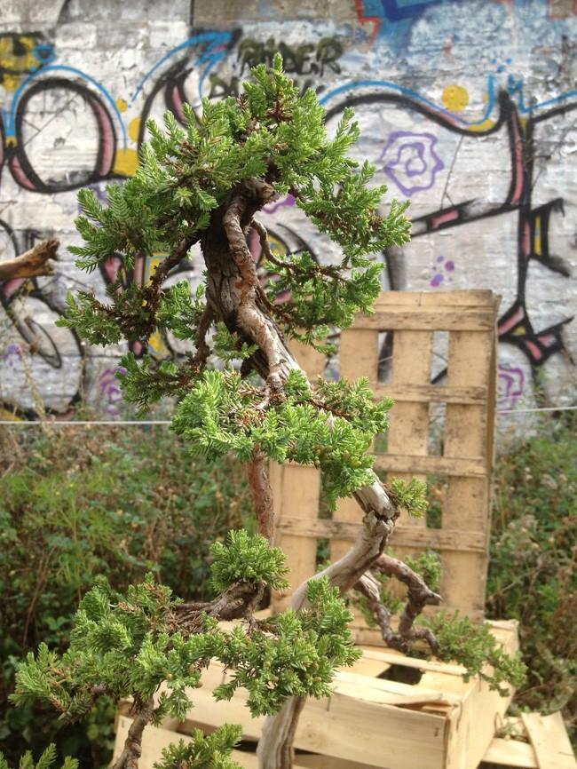 Urban bonsaïs Expo510