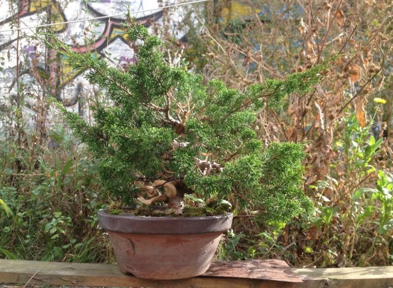 Urban bonsaïs Expo610