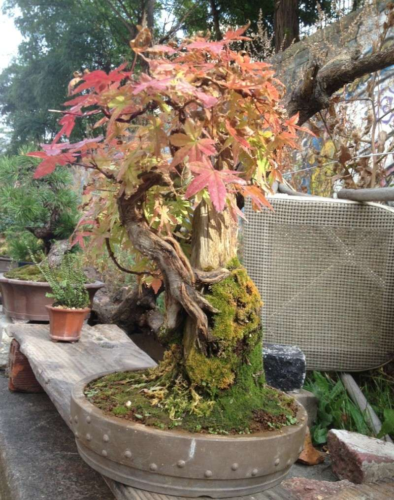 Urban bonsaïs Expo710