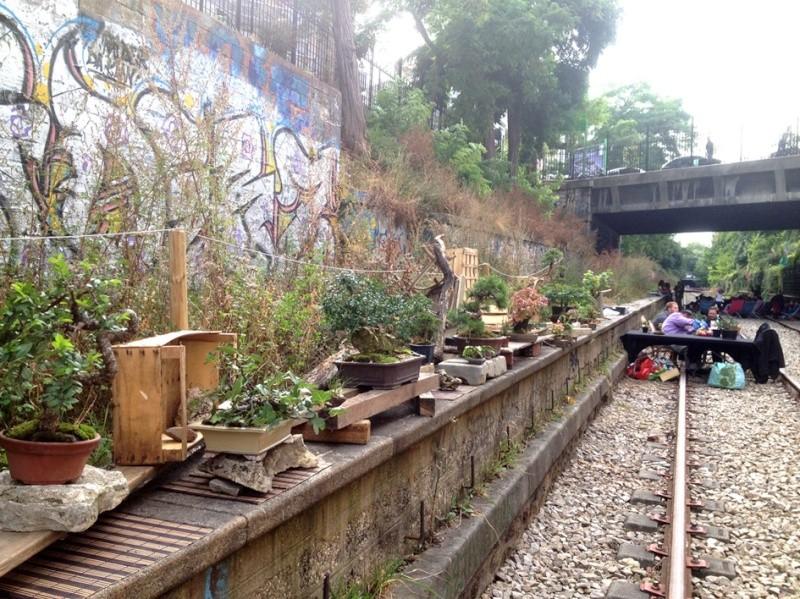 Urban bonsaïs Expo810