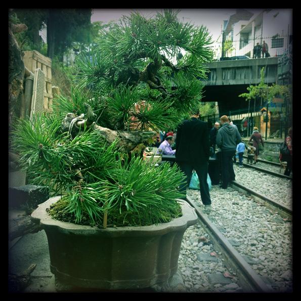 Urban bonsaïs Img_0610