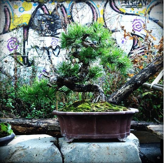 Urban bonsaïs Img_0611