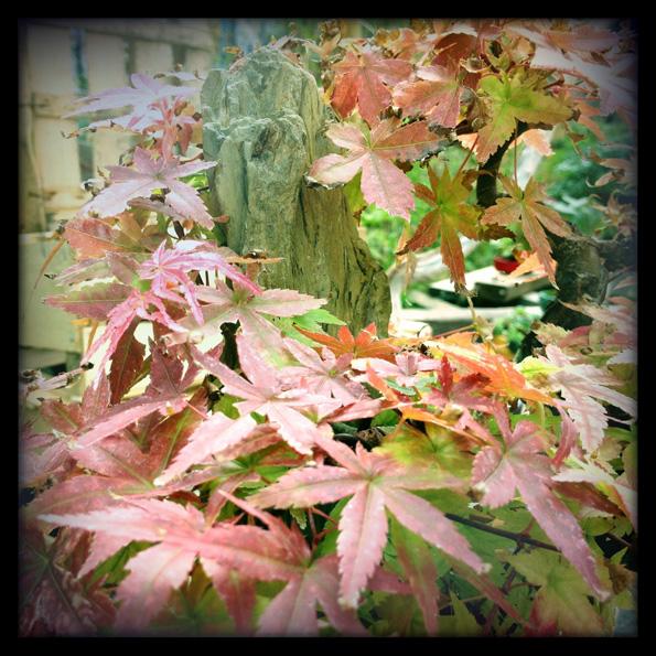 Urban bonsaïs Img_0612
