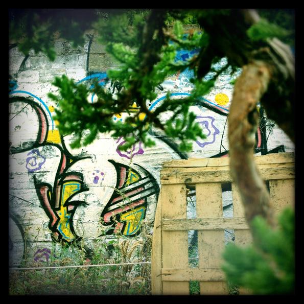 Urban bonsaïs Img_0613