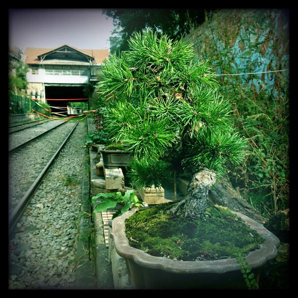 Urban bonsaïs Img_0614