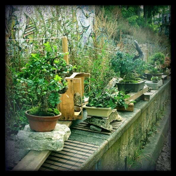 Urban bonsaïs Img_0615