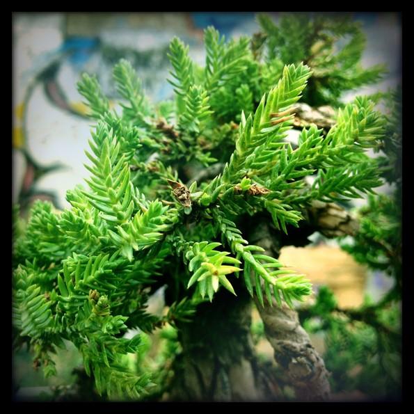 Urban bonsaïs Img_0616