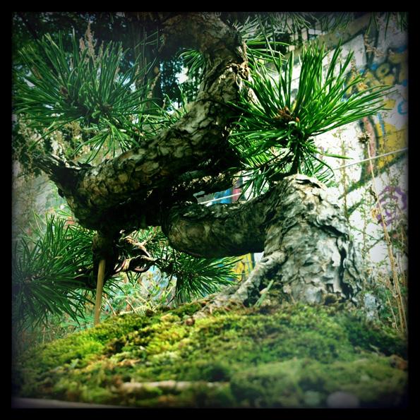 Urban bonsaïs Img_0617