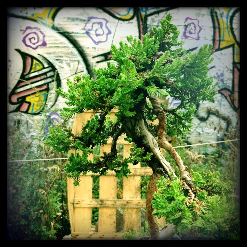 Urban bonsaïs Img_0618