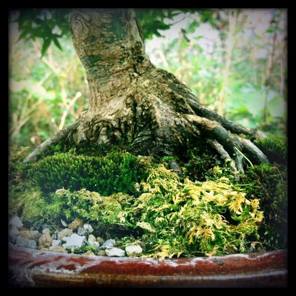 Urban bonsaïs Img_0710
