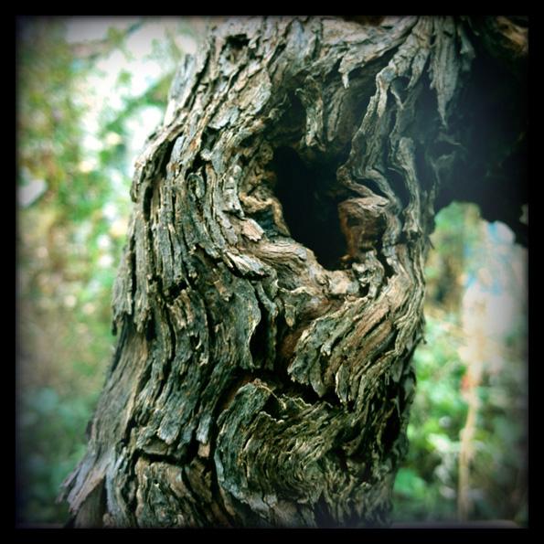 Urban bonsaïs Img_0711