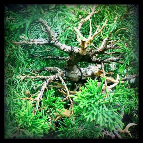 Urban bonsaïs Img_0712