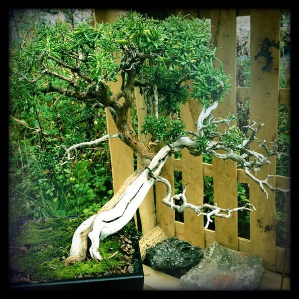 Urban bonsaïs Img_0713