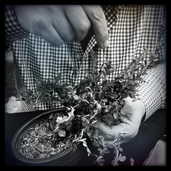 Urban bonsaïs Img_0714