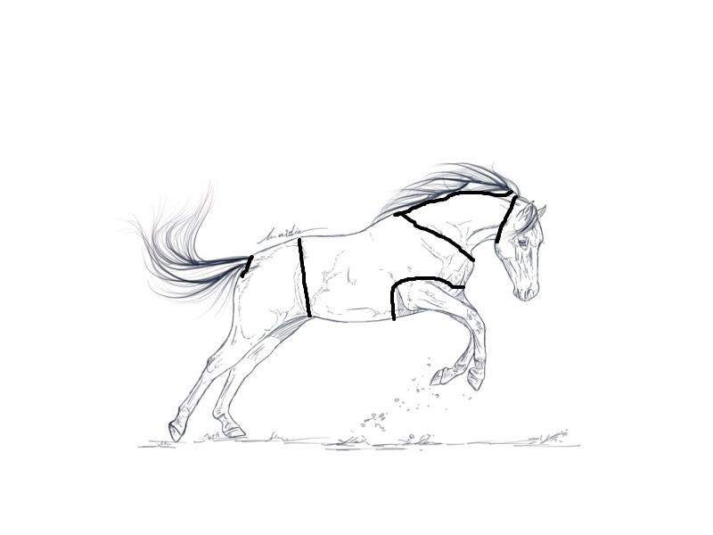 colo d'un poney de sport - Page 2 Poney_10