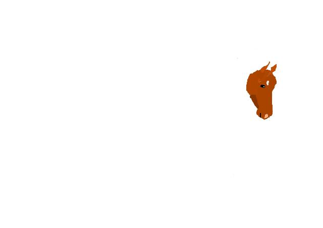 colo d'un poney de sport Tate10