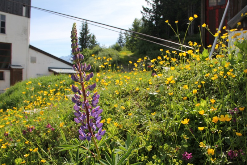 Photos en été - Les Houches - Page 2 81743610