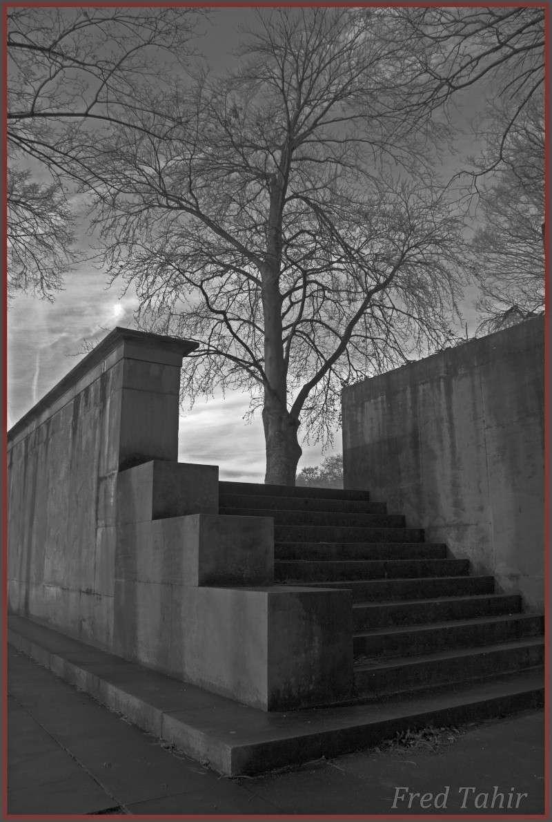 paysage urbain  Arbre_10